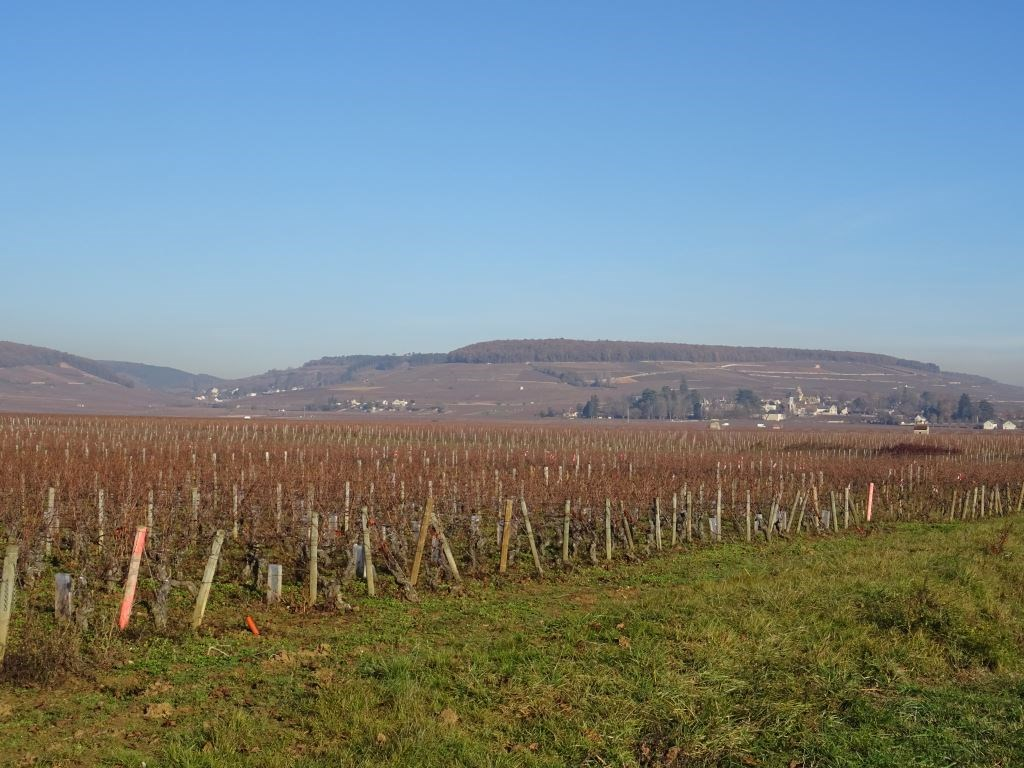 Winemaking in Burgundy